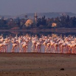 Cyprus sightseeings-Holidays-Excursions